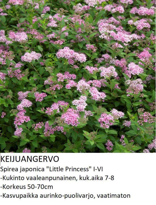 Angervo Keijuangervo little princess