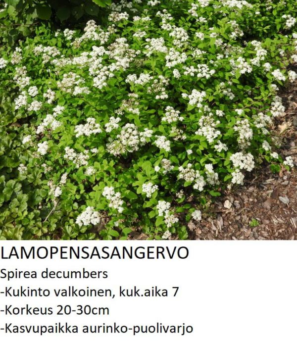 Angervo Lamopensasangervo