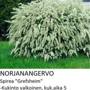 Angervo Norjanangervo