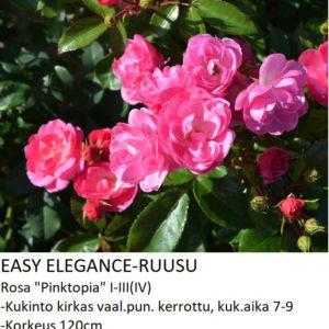 Easy elegance pinktopia