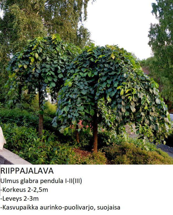 Jalava Riippajalava 150-250cm