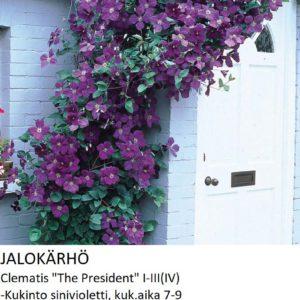Jalokärhö the president