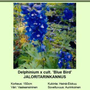Jaloritarinkannus blue bird