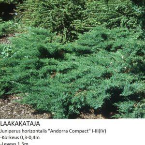 Kataja Laakakataja andorra compact