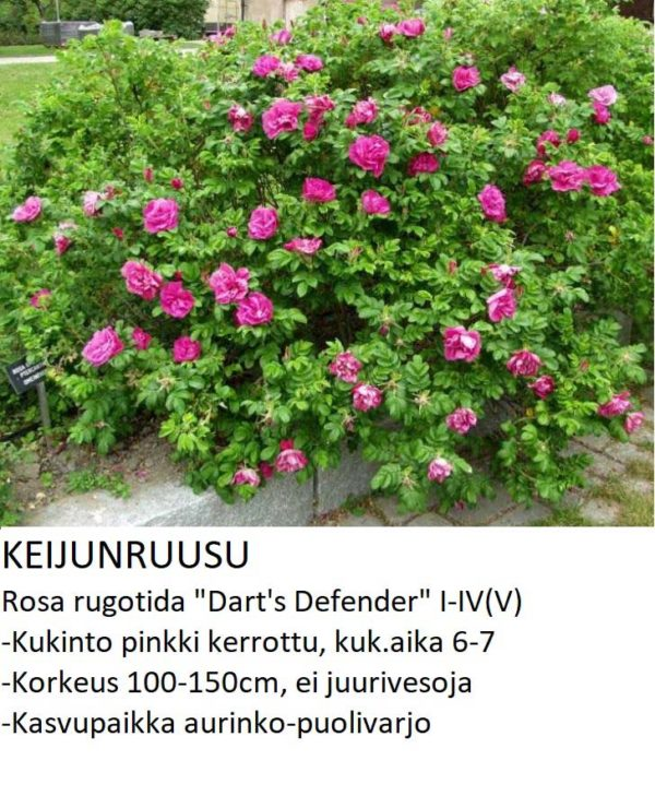 Keijunruusu darts defender