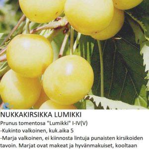Kirsikka Nukkakirsikka lumikki