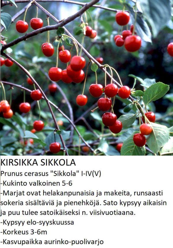Kirsikka sikkola