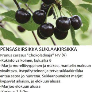 Kirsikka suklaakirsikka
