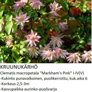 Kruunukärhö markhams pink