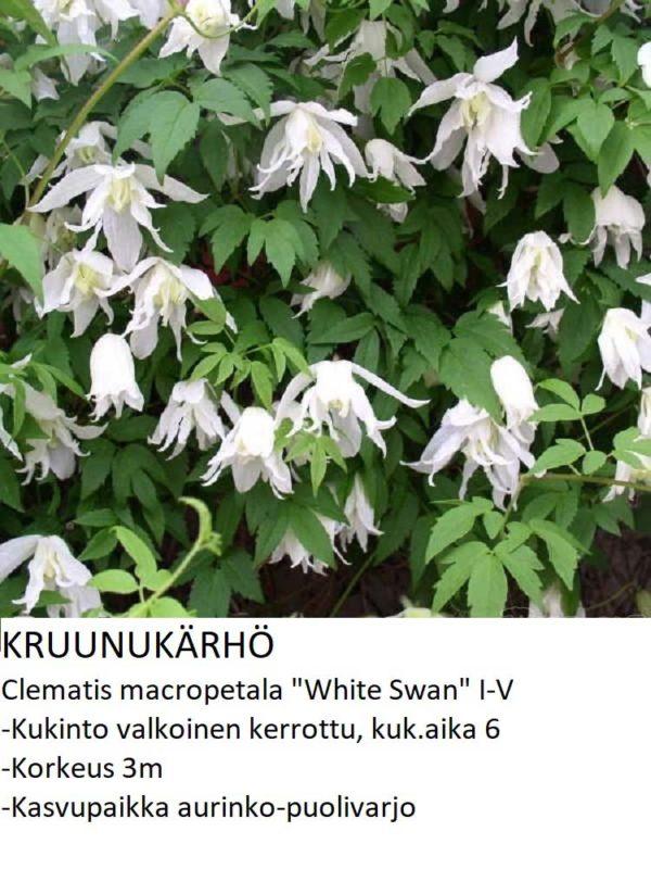 Kruunukärhö white swan