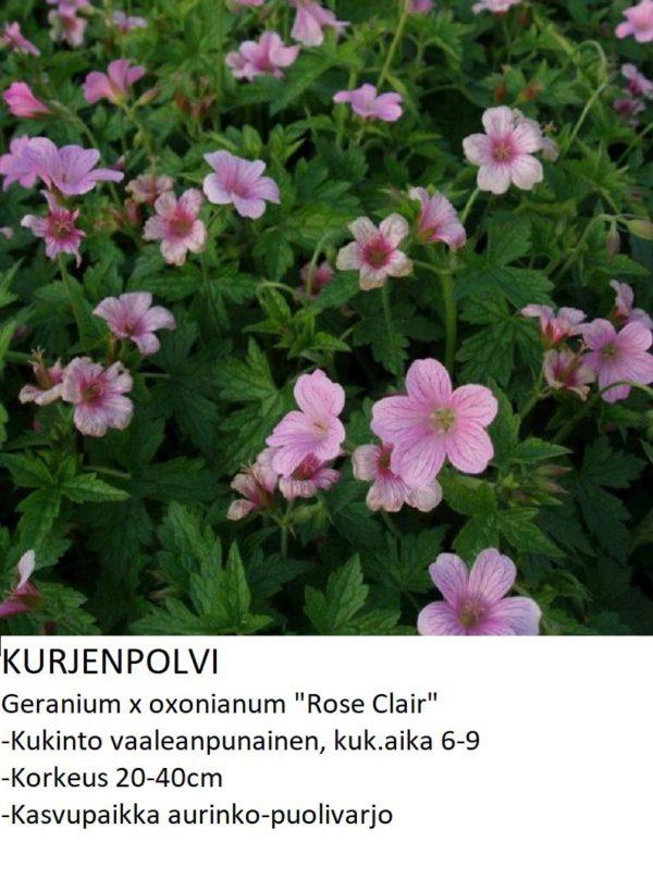 Kurjenpolvi rose clair