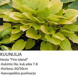 Kuunlilja fire island