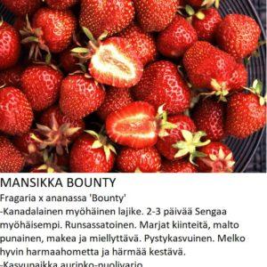 Mansikka bounty