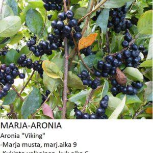 Marja-aronia