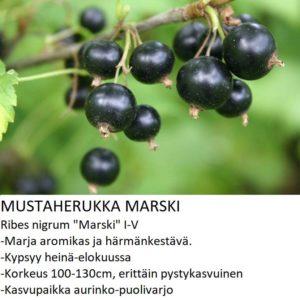 Mustaherukka marski