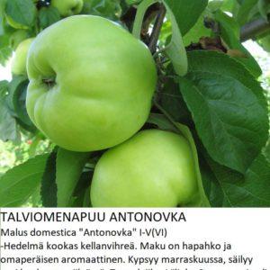 Omena antonovka