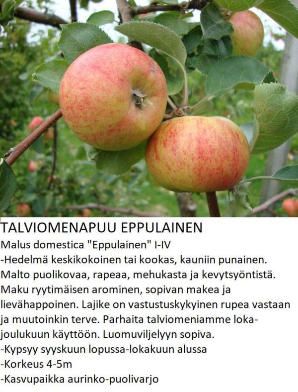 Omena eppulainen