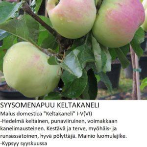 Omena keltakaneli
