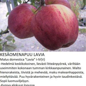 Omena lavia