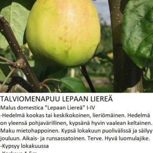 Omena lepaan liereä
