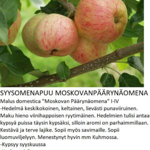 Omena moskovan päärynäomena