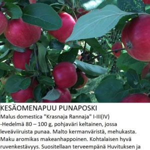 Omena punaposki