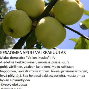 Omena valkeakuulas