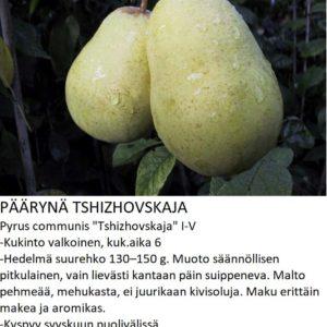 Päärynä Tshizhovskaja
