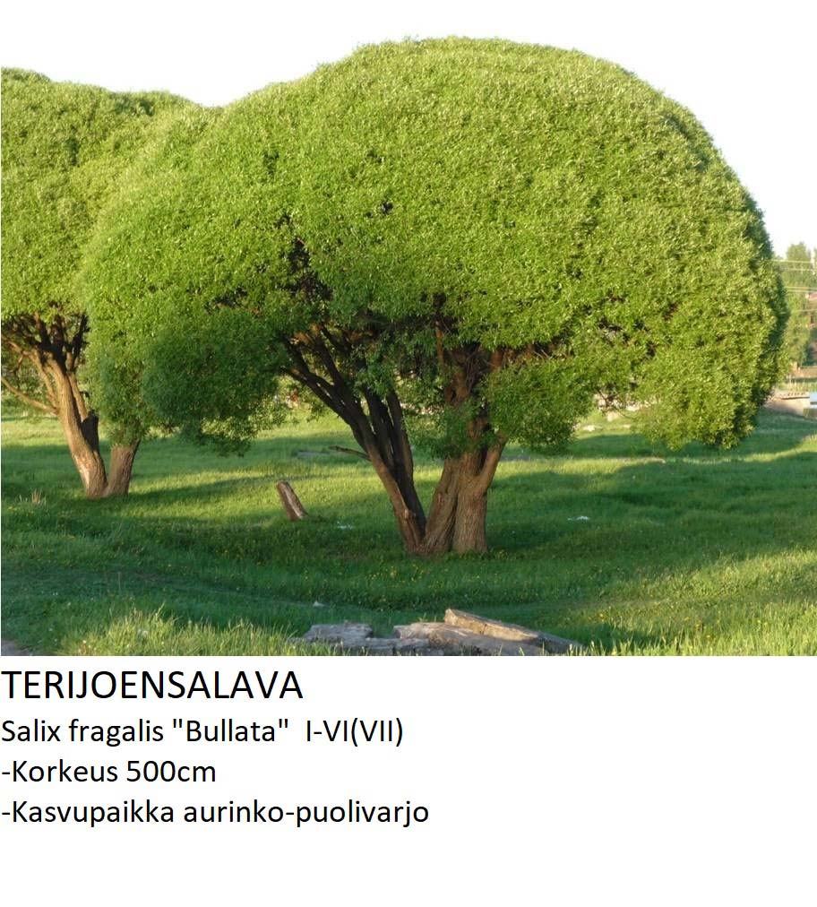 Paju Terijoensalava