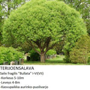 Paju Terijoensalava 150-200cm