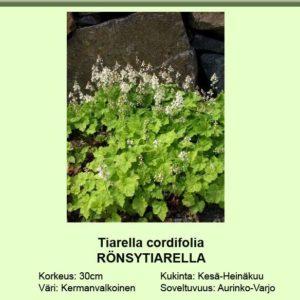 Rönsytiarella
