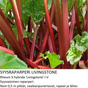Raparperi Syysraparperi livingstone