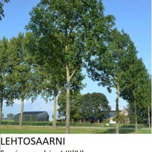 Saarni Lehtosaarni 150-200cm