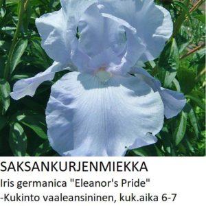 Saksankurjenmiekka eleanors pride