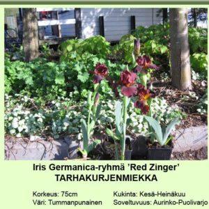 Saksankurjenmiekka red zinger