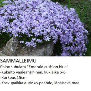 Sammalleimu emerald cushion blue